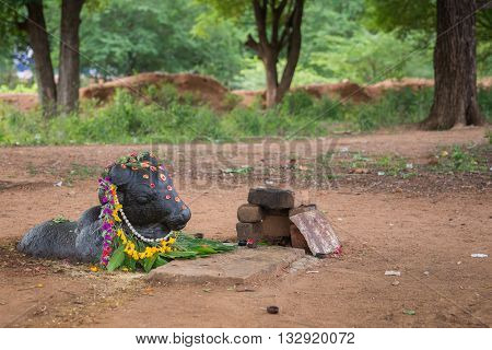 Chettinad India - October 17 2013: Ancient Shiva shrine in forest near Kothamangalam shows black Nandi facing the Shivalingam. He is decorated with flowers and lies half submerged in the brown dirt.
