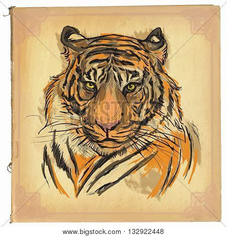 An hand drawn retro vector illustration colored line art. Freehand sketch of Tiger head.Hand drawing is editable in layers and groups. Background is isolated.Vintage processing on old paper background