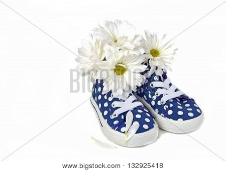 White daisy bouquet in blue and white polka dot sneakers isolated on white.