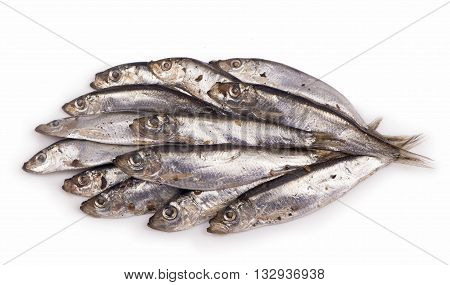 Salty fish sprat isolated on white background