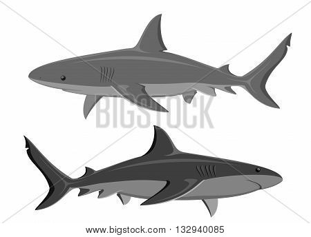Sharks. Set of two great white sharks isolated on white. Vector.