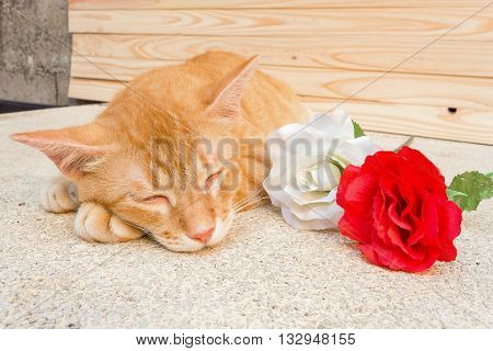 Orange cat sleeping. Cat sleep there on the table happy near flower.