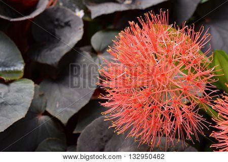 Beautiful bunch of orange flowers found in the wild