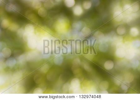 Dreamy Soft Glow Romantic Mood Tree Bush Bokeh Background, Abstract Sparkle Green And White Treet Bo