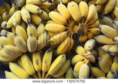 The banana is an edible fruit, botanically a berry, produced by several kinds of large herbaceous, flowering plants in the genus Musa. In some countries, bananas used for cooking may be called plantains. The fruit is variable in size, color,