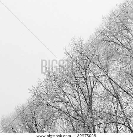 Photo of BW Tree Branches Split Picture by Two Half. Ying Yang Black and White Tree Background