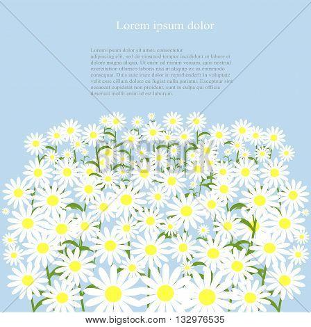White daisies on blue background, lorem ipsum, vector illustration