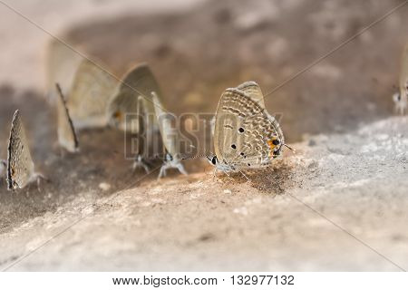 Outstanding Butterfly In Group , Closeup Brown And Black Butterfly, Lovely Animal Lovely Creature, B