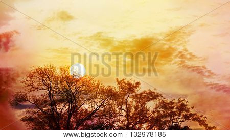 Amazing Nature Sky And Tree Top View With Sunet On Colourful Puffy Clouds Wide Sky With Blank Space