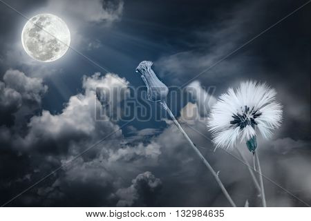 Attractive Photo Of Flowers With Full Moon And Moonlight In Nightly Sky. Outdoors.