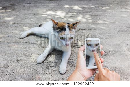 Hands with finger press or touch on smart phone screen or mobile phone shooting photo white cat on cement floor hand recording video or take a photo white cat via smartphone