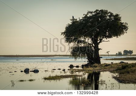African Fish Eagle In Tree On Riverbank
