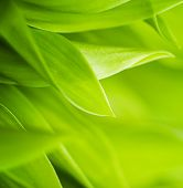 stock photo of photosynthesis  - Fresh green grass  - JPG