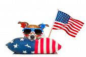 Постер, плакат: Fourth Of July Independence Day Dog