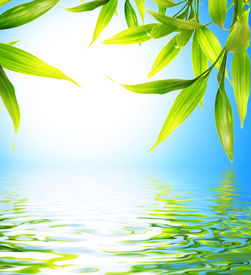 picture of bamboo leaves  - Bamboo leaves reflected in rendered water - JPG