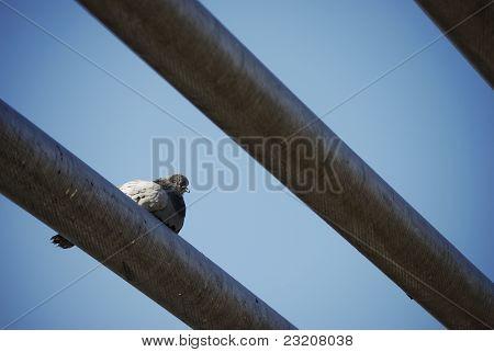 London Birds