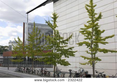 University Of Cambridge, Law Faculty