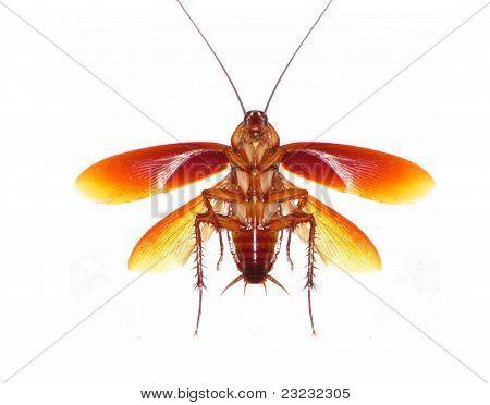 Under the Roach