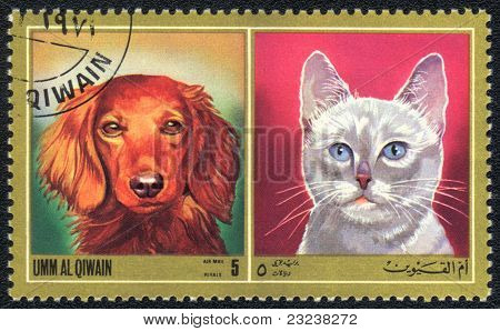 White Cat And Red Dog