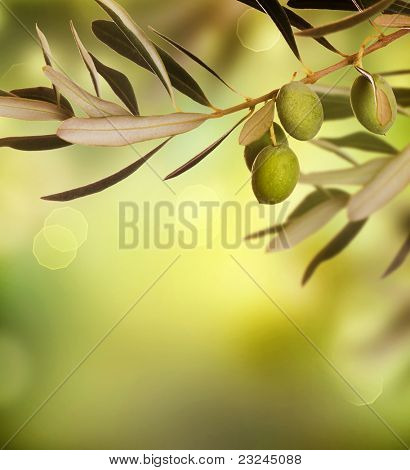 Olives border design