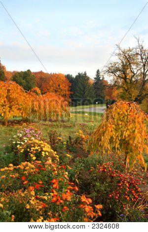 Vivid Autumn. Fall Colors