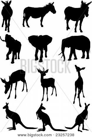 animals silhouette