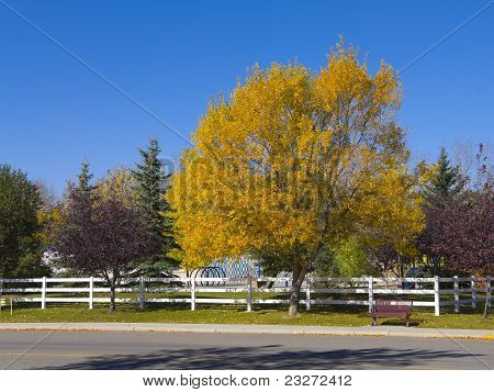 Park Bench On A Country Road In Autumn