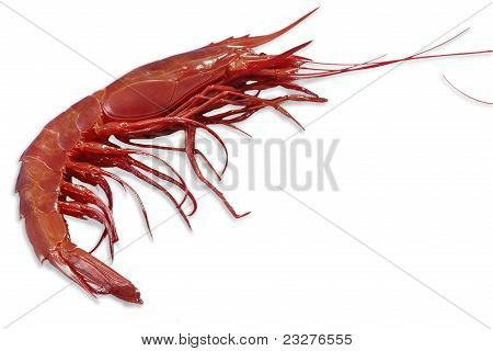 Single King Prawn Or Shrimp