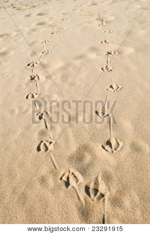 Bird Tracks On Sandy Beach
