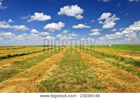 Wheat Farm Field At Harvest