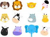 pic of jungle animal  - animals face set - JPG