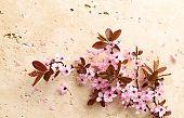 Pink Blossoms on stone background; spring blossom, sakura blossom, cherry blossom poster