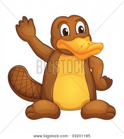 Illustration of a platypus on white - EPS VECTOR format also available in my portfolio.