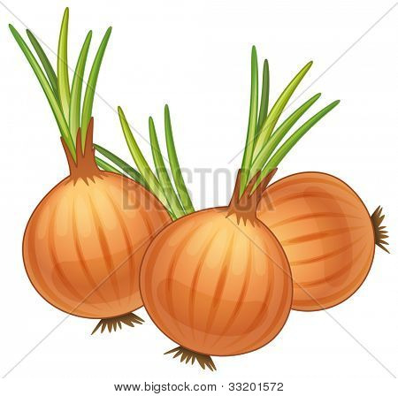 illustration of some brown onions - EPS VECTOR format also available in my portfolio.