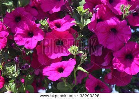 La naturaleza de las flores