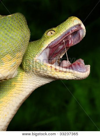 Python with open mouth