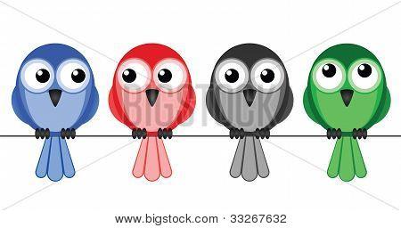 Bird colour wire