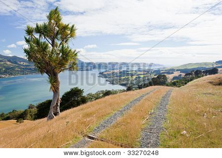 Otago peninsula coastal landscape, Dunedin, NZ