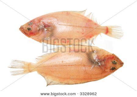 Two Flatfish