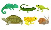 Cold-blooded Animals, Amphibians And Reptiles, Lizards, Snail Vector Illustration Set Isolated On Wh poster
