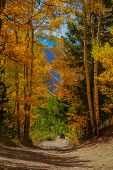 Scenic Ophir pass four whhel drive road in Colorado poster