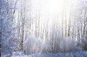 Sunset In Winter Forest. Snow On The Tree Branches. Frozen Branch Of A Tree In A Blue Sky Nature poster