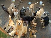 picture of stray dog  - A lot of stray dogs in the shelter - JPG