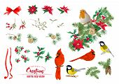 Tit Bird, Robin Bird, Cardinal Bird, Christmas Wreath Of Spruce, Pine, Poinsettia, Dog Rose, Fir. Se poster