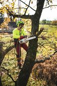 Arborist Man Preparing For Climbing On A Tree. The Worker With Helmet Working At Height On The Trees poster