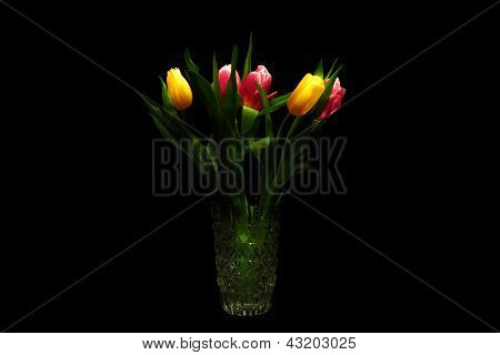 Five Glowing Tulips On The Dark Background