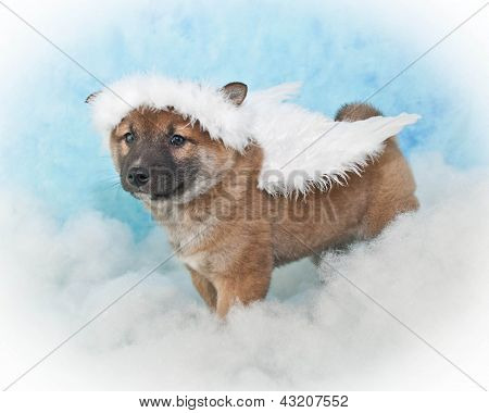 Angel Puppy