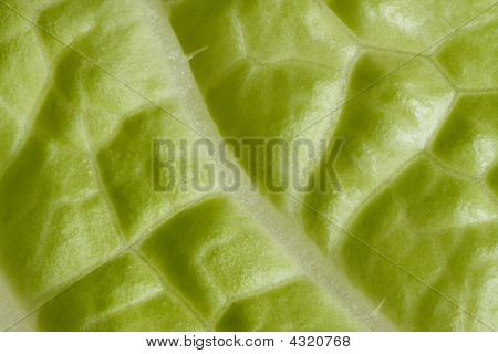 Structure Of Salad Leaf