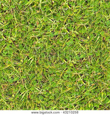 Grama verde. Textura perfeita.