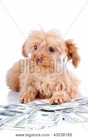 Decorative Doggie And Dollars.
